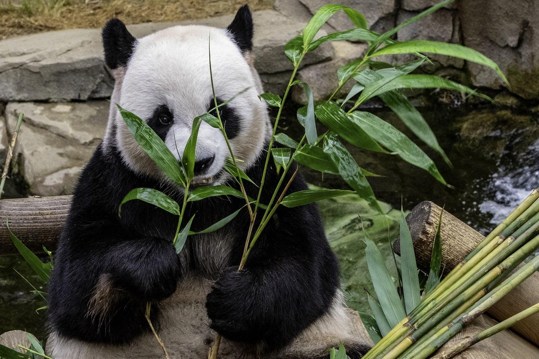 Algorytm Google Panda