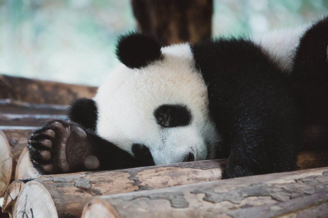 Algorytm Google Panda - studio A7