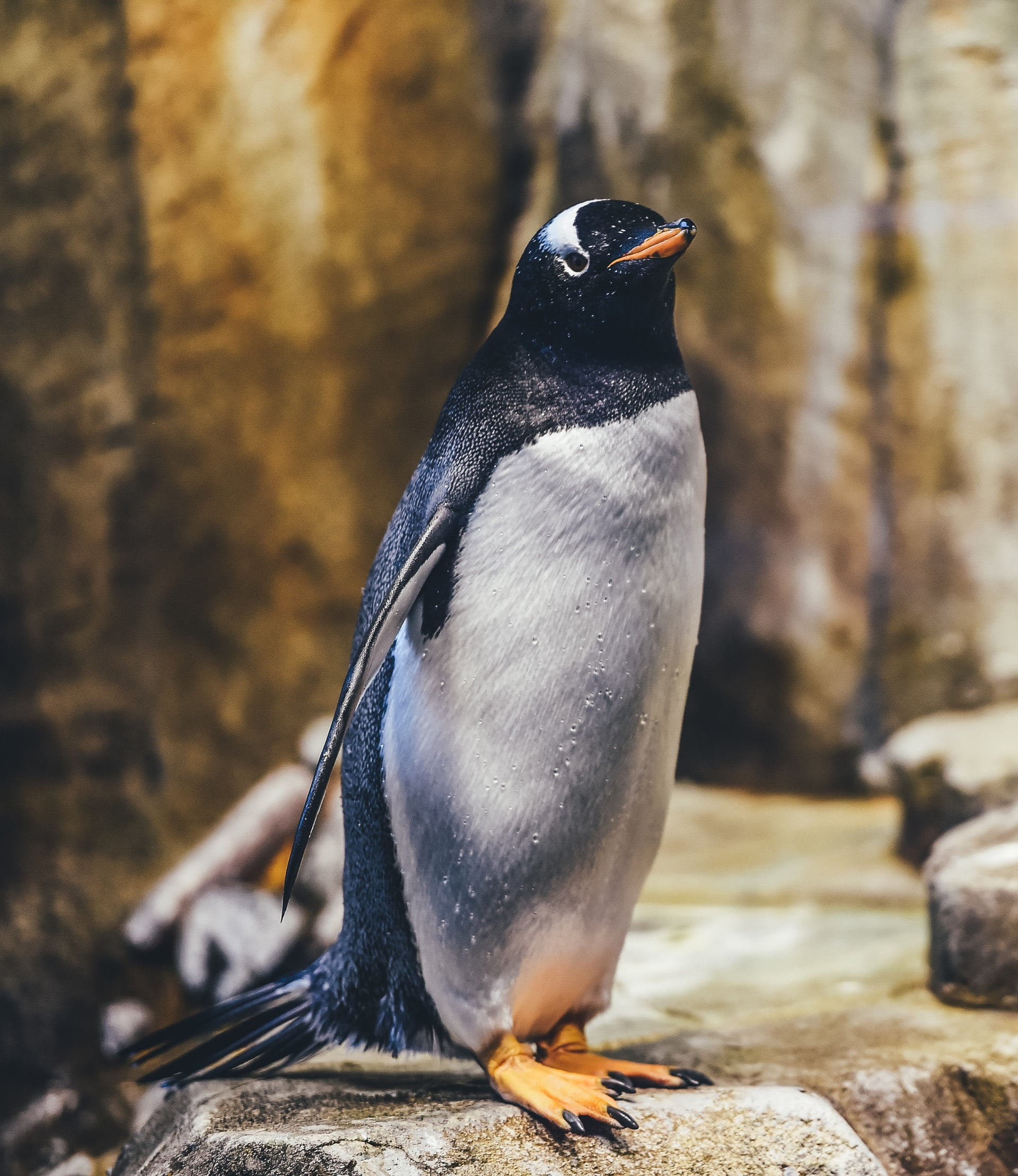 Algorytm Google Pingwin